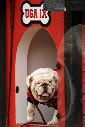 Sep 21, 2013; Athens, GA, USA; Georgia Bulldogs mascot UGA IX shown during the game against the North Texas Mean Green during the first half at Sanford Stadium. Georgia defeated North Texas 45-21. Mandatory Credit: Dale Zanine-USA TODAY Sports