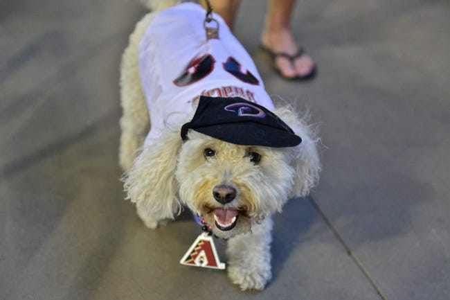 Jun 22, 2014; Phoenix, AZ, USA; A dog dressed in Arizona Diamondbacks gear looks on during the game against the San Francisco Giants at Chase Field. Mandatory Credit: Matt Kartozian-USA TODAY Sports