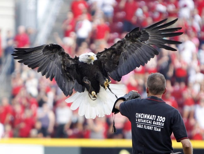Jul 12, 2014; Cincinnati, OH, USA; A eagle from the Cincinnati Zoo lands on his trainers arm prior to the game against the Cincinnati Reds and the Pittsburgh Pirates at Great American Ball Park. Mandatory Credit: Frank Victores-USA TODAY Sports