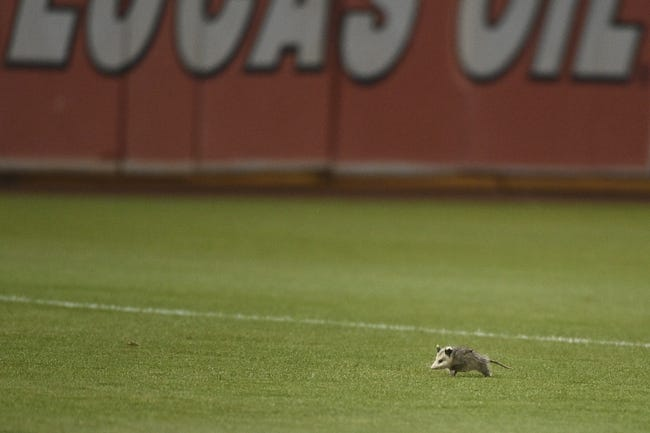 August 4, 2014; Oakland, CA, USA; A possum runs across the foul territory during the tenth inning between the Oakland Athletics and the Tampa Bay Rays at O.co Coliseum. The Athletics defeated the Rays 3-2. Mandatory Credit: Kyle Terada-USA TODAY Sports