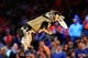 May 5, 2013; New York, NY, USA; A rescue dog fetches a frisbee during the first half of game one of the second round of the NBA Playoffs between against the New York Knicks and Indiana Pacers. Pacers won the game 102-95. Mandatory Credit: Joe Camporeale-USA TODAY Sports