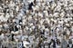 Sep 14, 2013; University Park, PA, USA; Students in the Penn State student section cheer during the third quarter against the Central Florida Knights at Beaver Stadium. Mandatory Credit: Matthew O'Haren-USA TODAY Sports