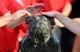 Sep 12, 2013; Ruston, LA, USA; Louisiana Tech band members rub a bulldog statue before the Louisiana Tech Bulldogs game against the Tulane Green Wave at Joe Aillet Stadium. Mandatory Credit: Chuck Cook-USA TODAY Sports