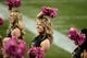 Oct 26, 2013; Boulder, CO, USA; Colorado Buffaloes cheerleaders perform in the second quarter against the Arizona Wildcats at Folsom Field. Mandatory Credit: Ron Chenoy-USA TODAY Sports
