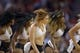 Nov 7, 2013; Houston, TX, USA; Houston Rockets cheerleaders dance against the Los Angeles Lakers during the second half at Toyota Center. The Lakers won 99-98. Mandatory Credit: Thomas Campbell-USA TODAY Sports