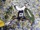 Dec 7, 2013; Atlanta, GA, USA; Auburn Tigers defensive back Robenson Therezie (27) plays in confetti after defeating the Missouri Tigers in the 2013 SEC Championship game at Georgia Dome. Auburn won 59-42. Mandatory Credit: John David Mercer-USA TODAY Sports