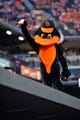 May 13, 2014; Baltimore, MD, USA; Baltimore Orioles mascot during a game against the Detroit Tigers at Oriole Park at Camden Yards. The Tigers defeated the Orioles 4-1. Mandatory Credit: Joy R. Absalon-USA TODAY Sports