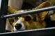 Jun 22, 2014; Phoenix, AZ, USA; A dog watches the game between the Arizona Diamondbacks and the San Francisco Giants during bark at the park at Chase Field. Mandatory Credit: Matt Kartozian-USA TODAY Sports