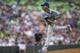 Aug 16, 2014; Minneapolis, MN, USA; Kansas City Royals starting pitcher Yordano Ventura (30) delivers a pitch in the fifth inning against the Minnesota Twins at Target Field. Mandatory Credit: Jesse Johnson-USA TODAY Sports